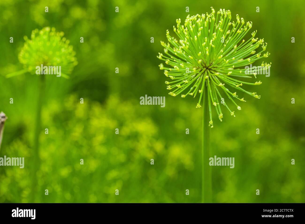 plants-outdoor-2C77CTX.jpg