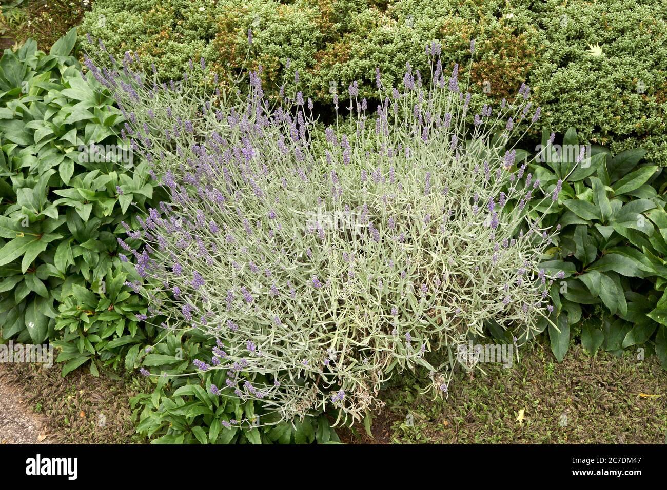 flowering-plant-2C7DM47.jpg