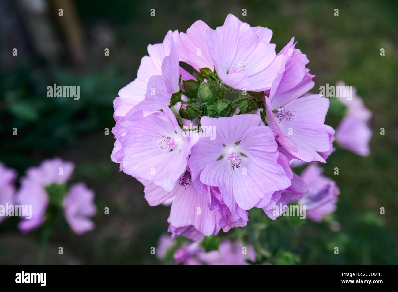 closeuppurple-flower-2C7DM4E.jpg