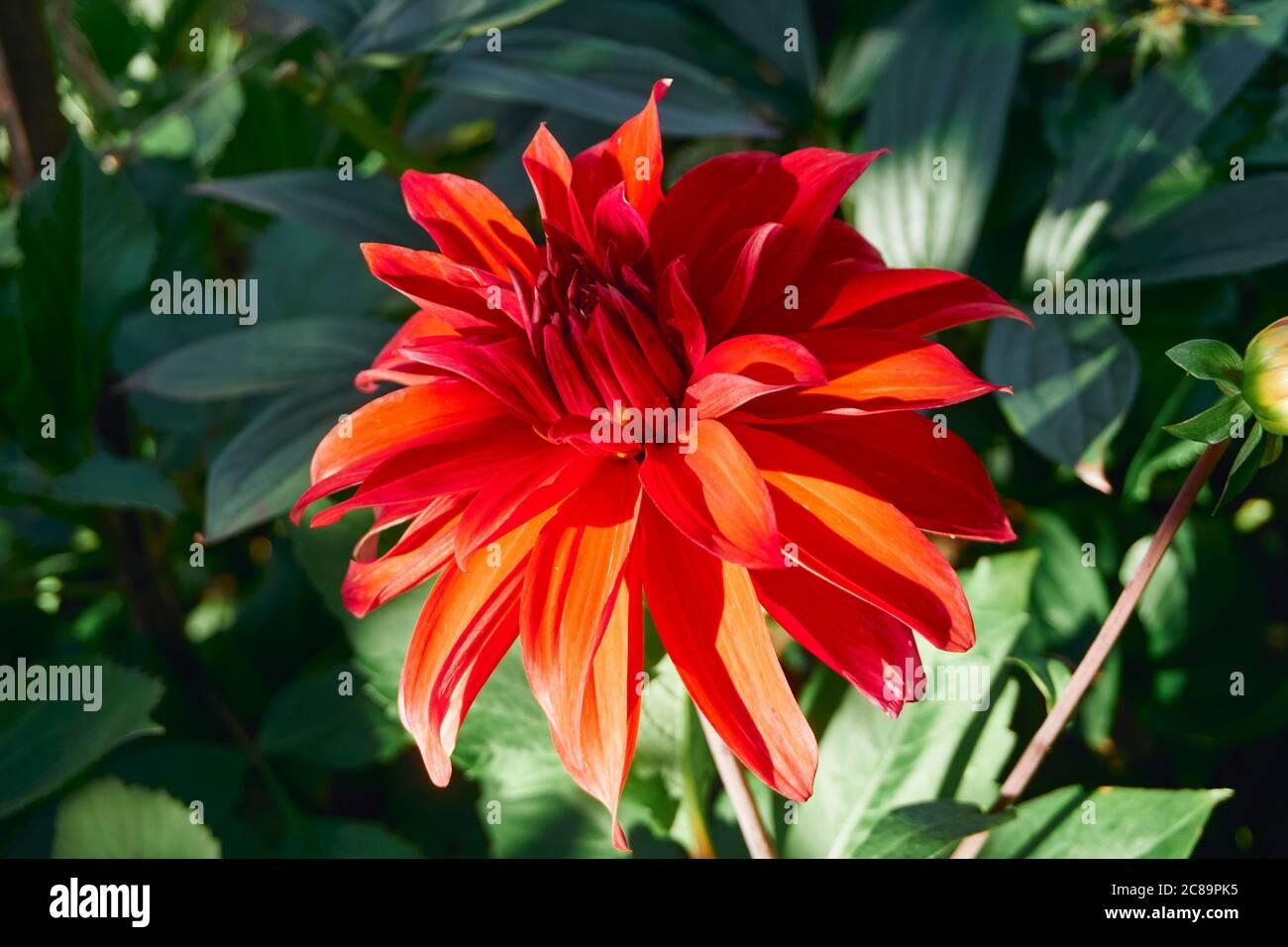 red-flower-2C89PK5.jpg