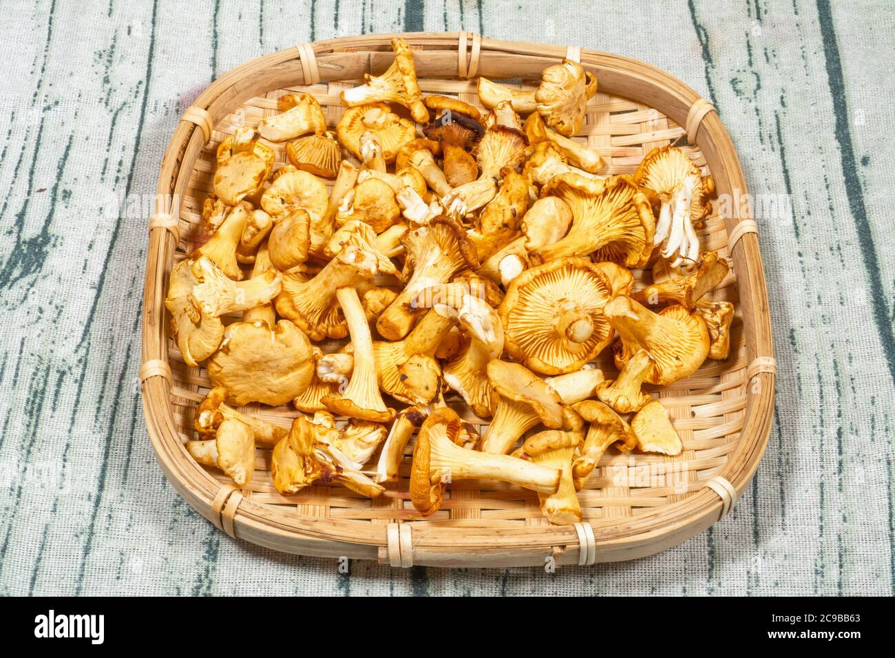 Freshly picked Chanterelle (Cantharellus cibarius) mushrooms in a wicker tray Stock Photo