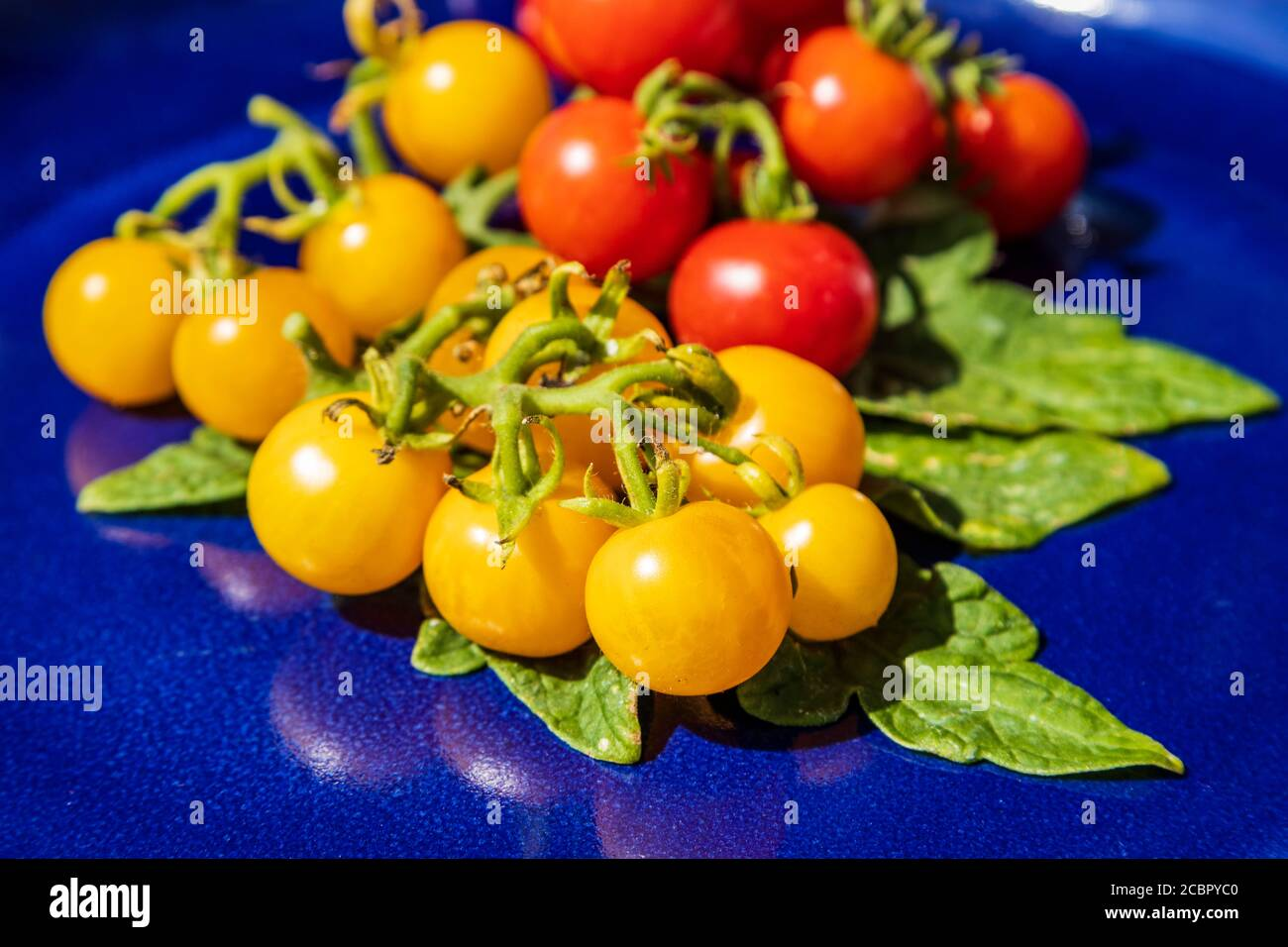 fresh-yellow-and-red-organic-cherry-tomatoes-on-a-blue-plate-with-leaves-2CBPYC0.jpg