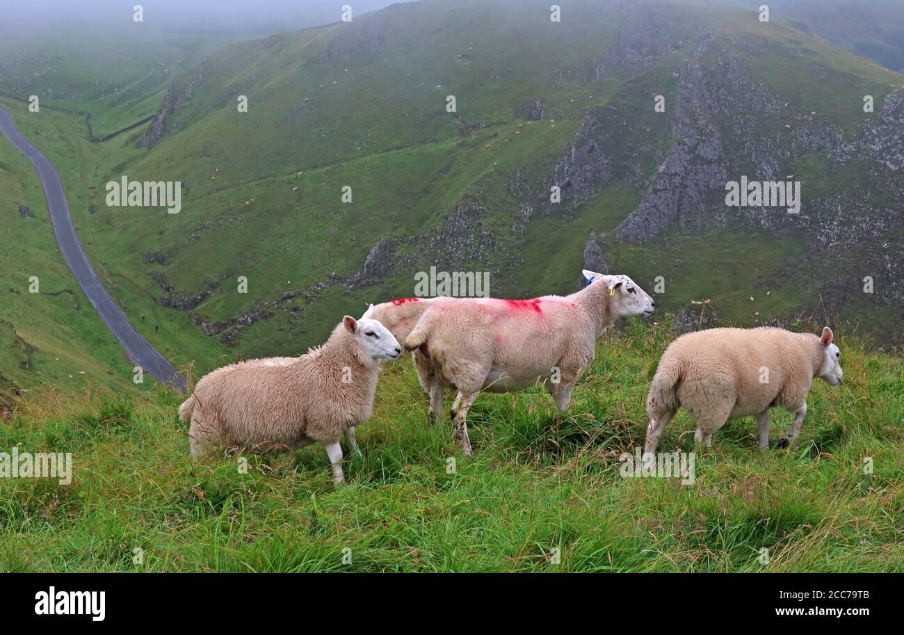 GoTonySmith,@HotpixUK,HotpixUK,High Peak,Derbyshire,England,UK,S33 8WA,cattle,hill,hill farming,nature,remote,road,single track