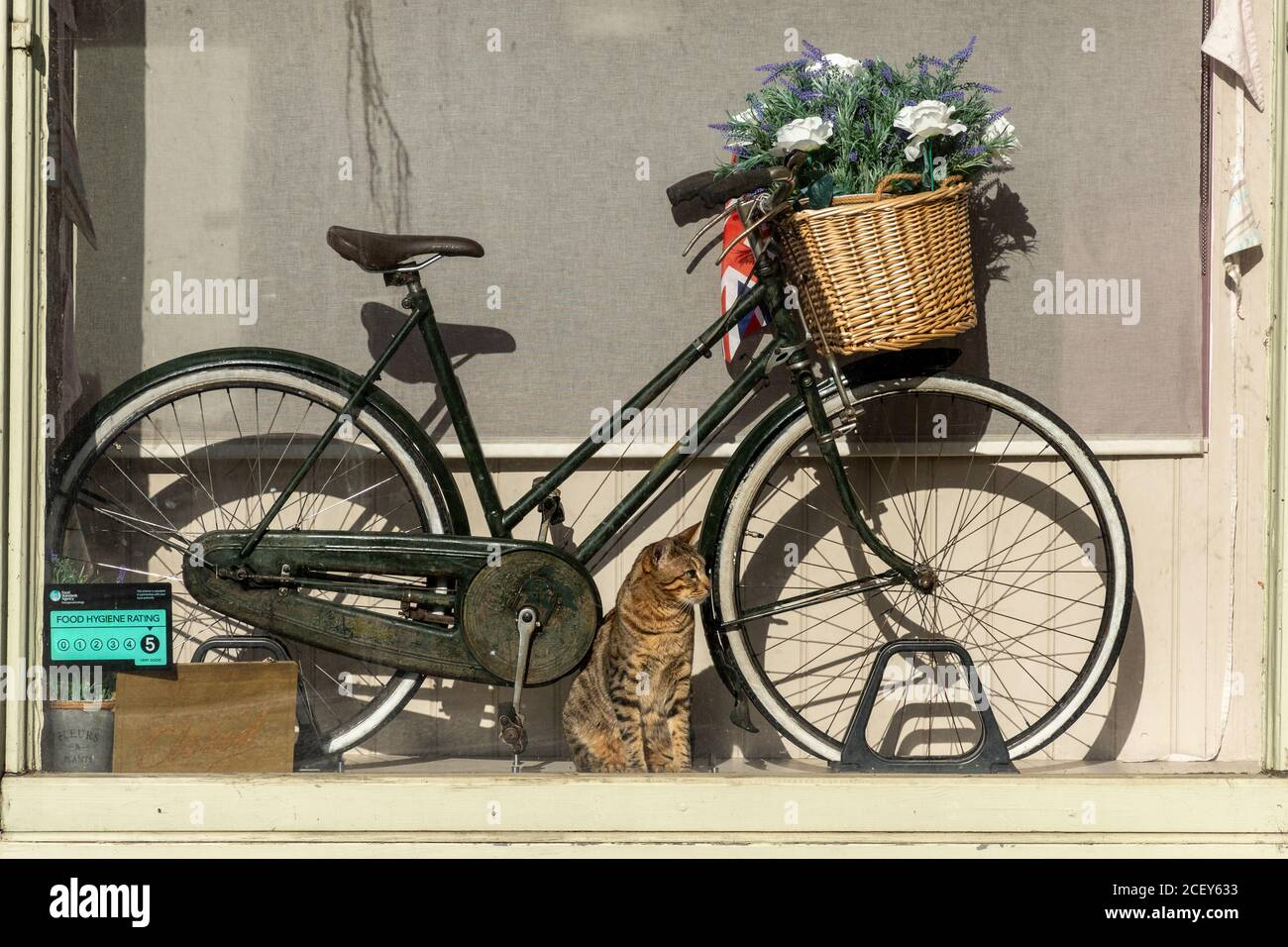 tabby-cat-sitting-in-a-shop-window-with-a-vintage-bicycle-2CEY633.jpg