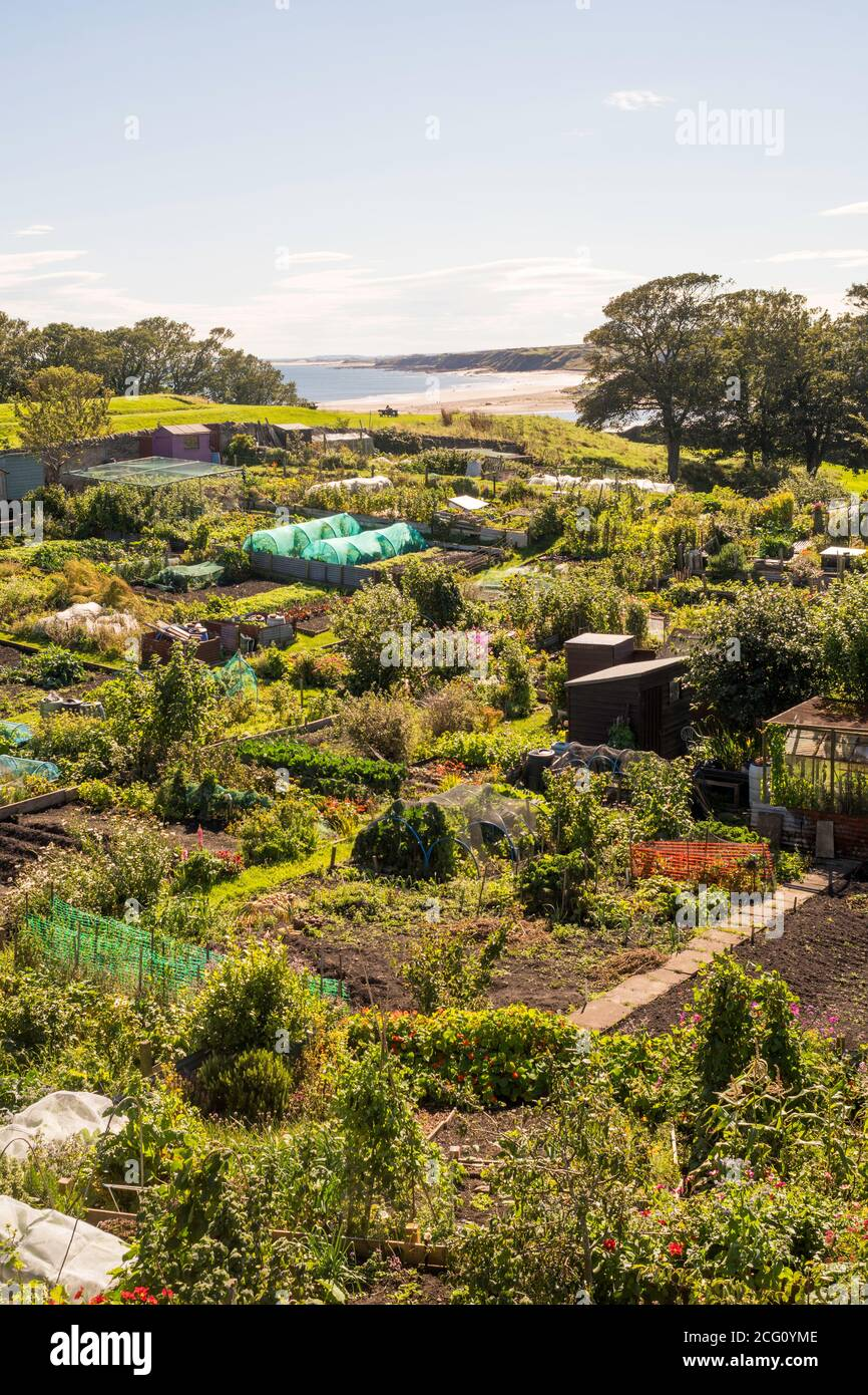 allotment-gardens-at-berwick-upon-tweed-