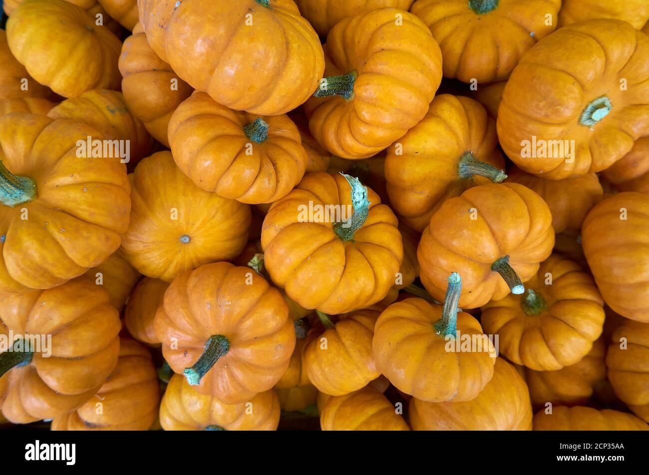 miniature-pumpkins-for-sale-in-a-market-