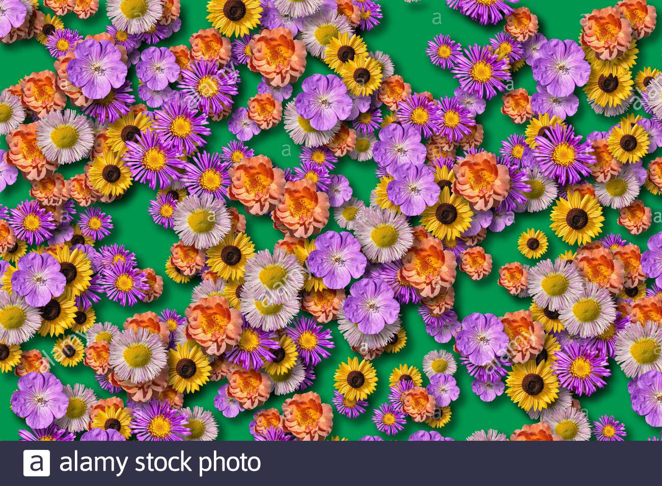 arrangement-of-flowers-colourful-blossom