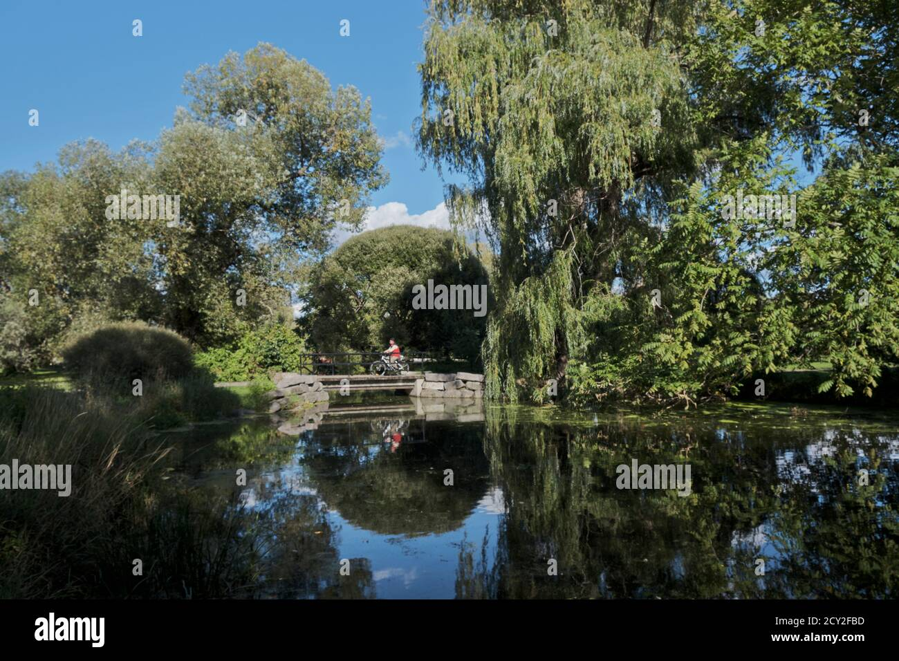 bridge-over-a-pond-on-rideau-canal-side-arm-with-cyclist-going-over-large-willow-reflecting-on-side-2CY2FBD.jpg