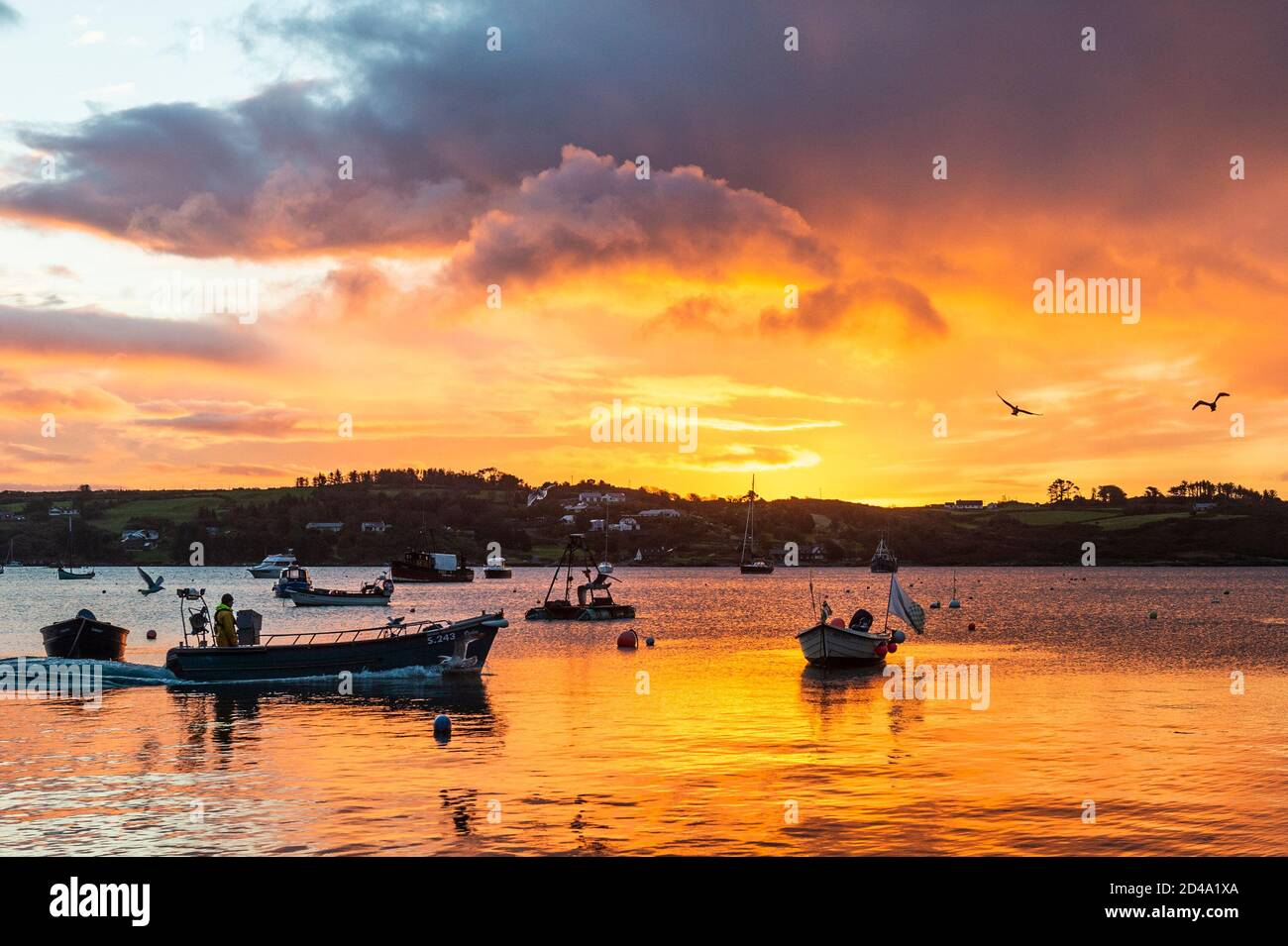 schull-west-cork-ireland-9th-oct-2020-a-fisherman-pilots-his-boat-for-a-trip-to-pull-his-crab-pots-in-schull-harbour-as-the-sun-rises-over-the-water-credit-ag-newsalamy-live-news-2D4A1XA.jpg