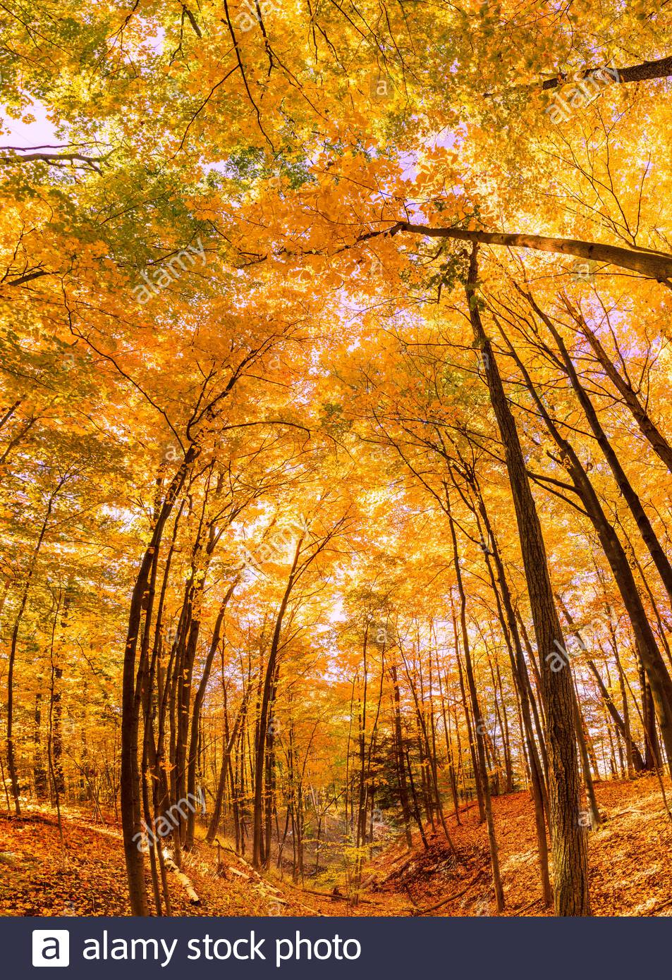 autumn-fall-deciduous-carolinian-forest-