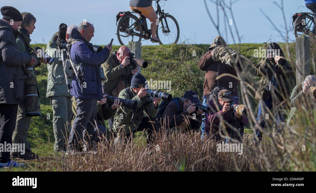 a-large-group-of-wildlife-photographers-crowding-round-taking-a-picture-of-a-rare-animal-or-bird-on-a-saltmarsh-keyhaven-uk-2DA408P.jpg