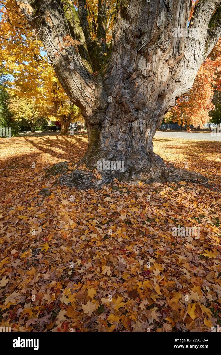 fallen-autumn-leaves-scattered-at-the-ba