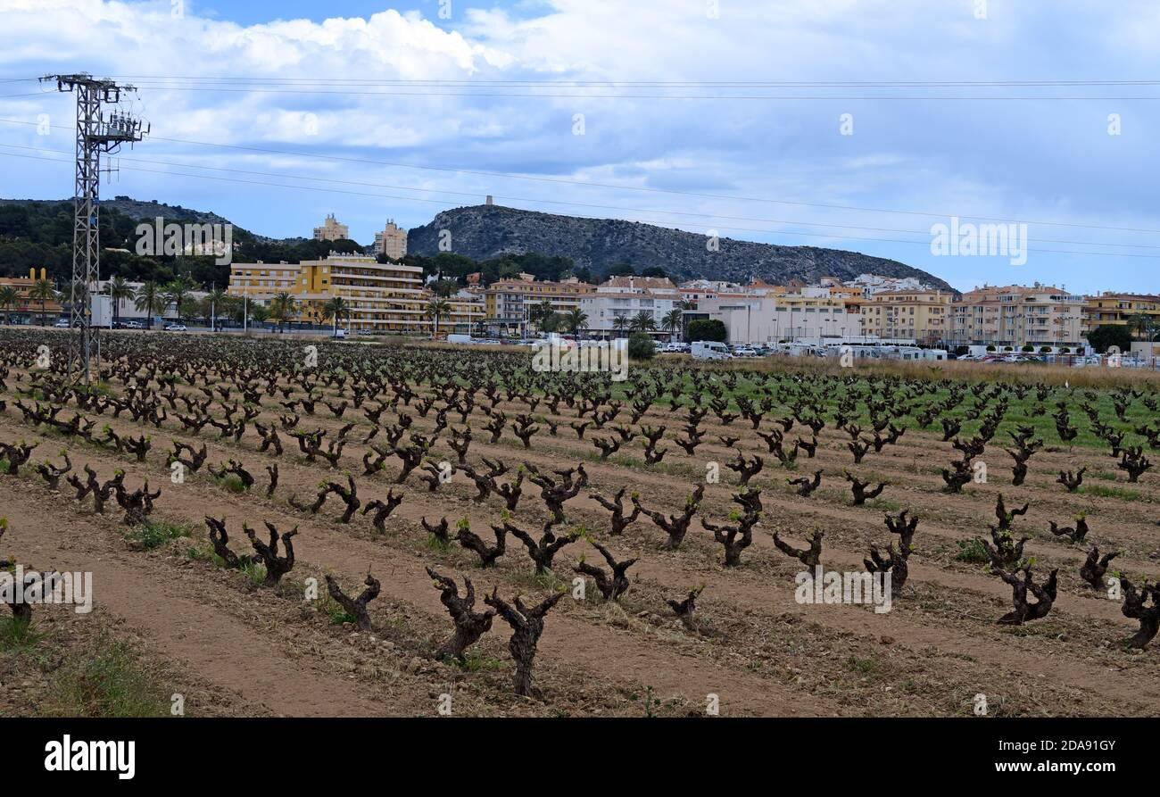 GoTonySmith,HotpixUK,@HotpixUK,Moriara,Spain,wine,region,Moraira Spain,springtime,spring time,Moraira Wine Tasting,Teulada