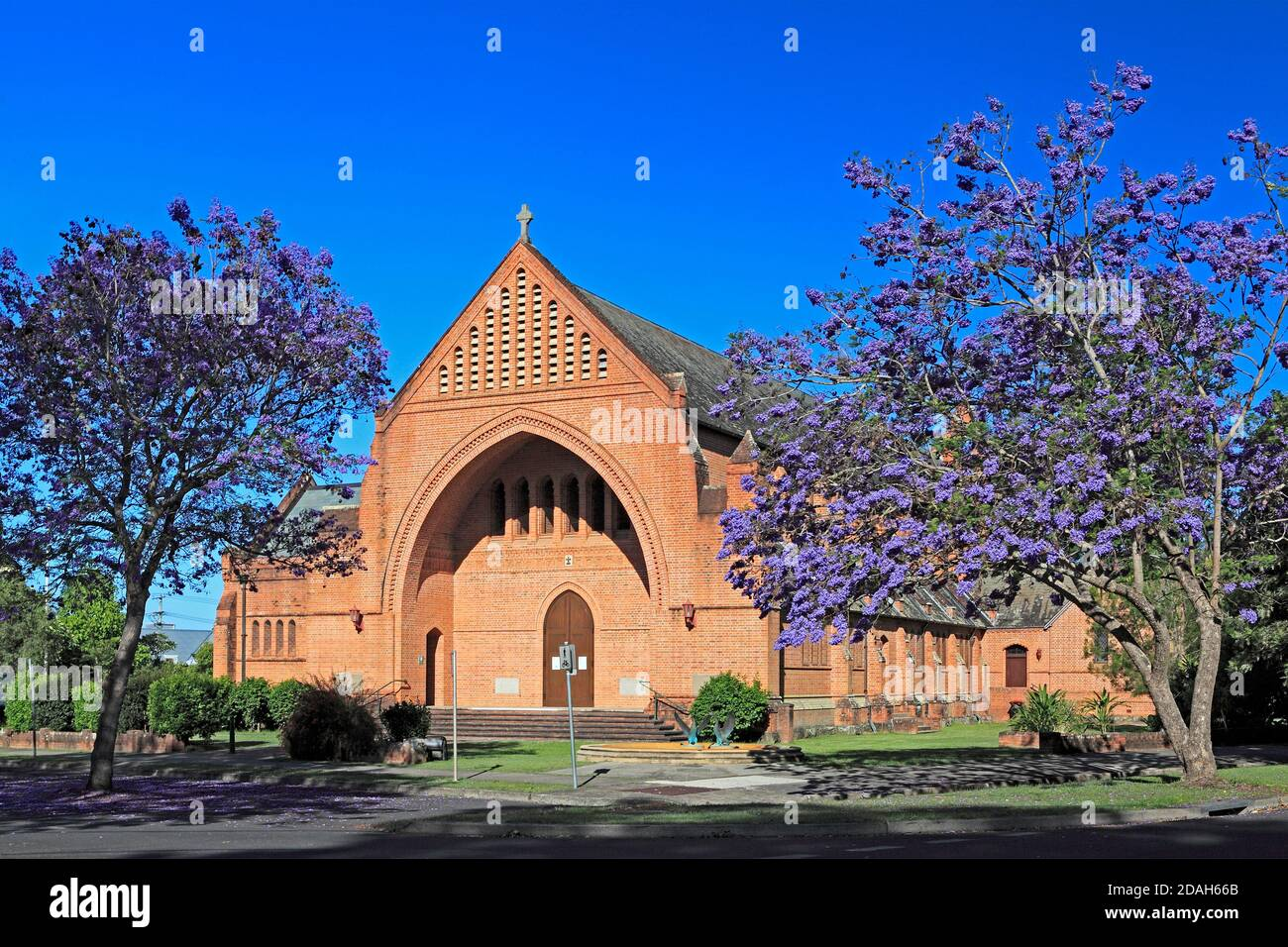 anglican-cathedral-church-of-christ-the-king-also-known-as-christ-church-cathedral-grafton-nsw-australia-two-flowering-jacaranda-trees-are-in-front-2DAH66B.jpg