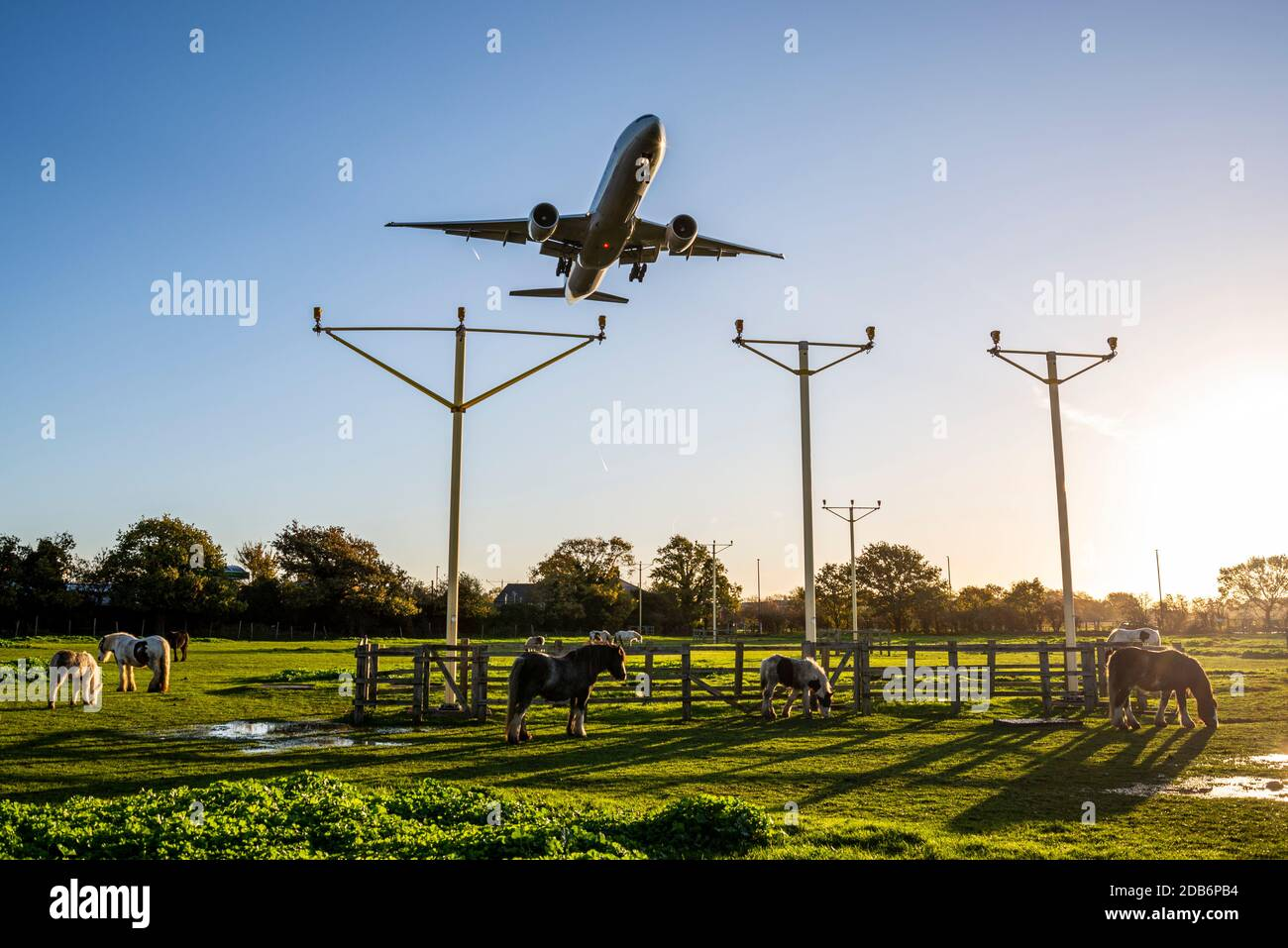 jet-airliner-plane-on-approach-to-land-at-london-heathrow-airport-uk-flying-over-a-field-with-horses-landing-system-approach-lights-dawn-sunlight-2DB6PB4.jpg