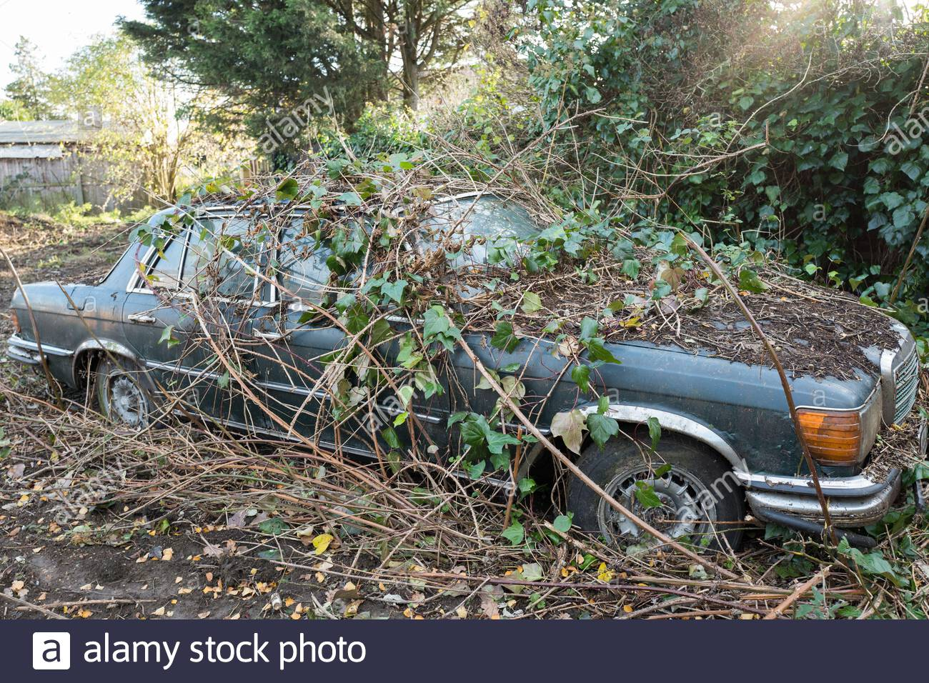 ivy-grows-over-an-abandoned-mercedes-car