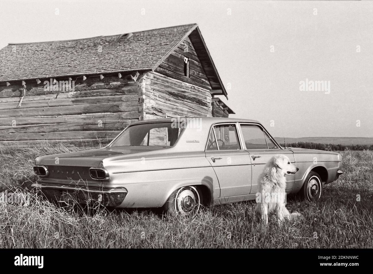vintage-dovetail-corner-notched-pioneer-cabin-with-a-1966-dodge-dart-4-door-and-a-kuvasz-dog-rural-alberta-canada-1976-2DKNNWC.jpg