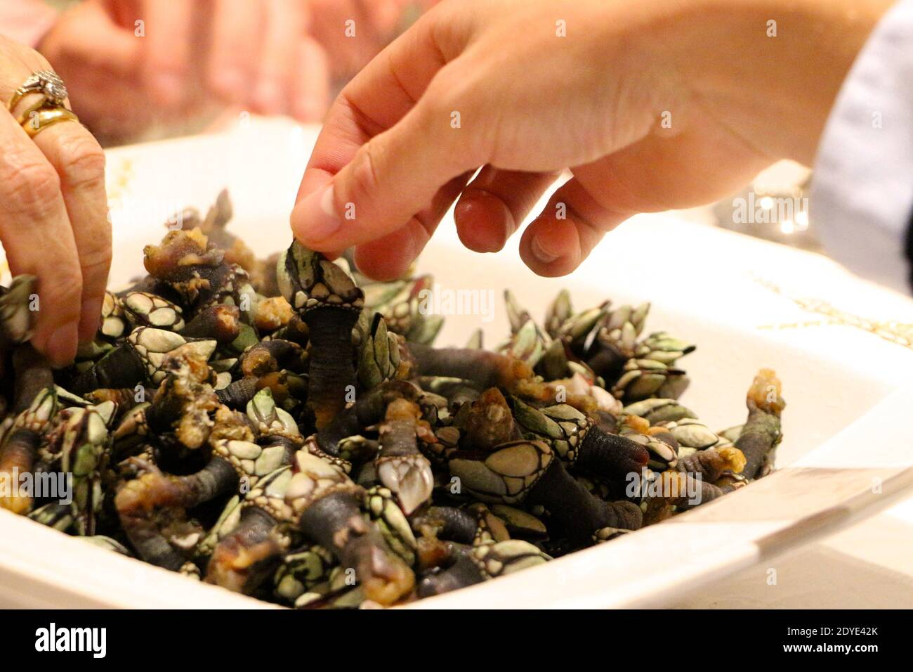 picking-up-by-hand-hot-steaming-percebes-a-type-of-barnacle-from-galicia-spain-traditional-at-christmas-in-spain-santander-cantabria-spain-2020-2DYE42K.jpg