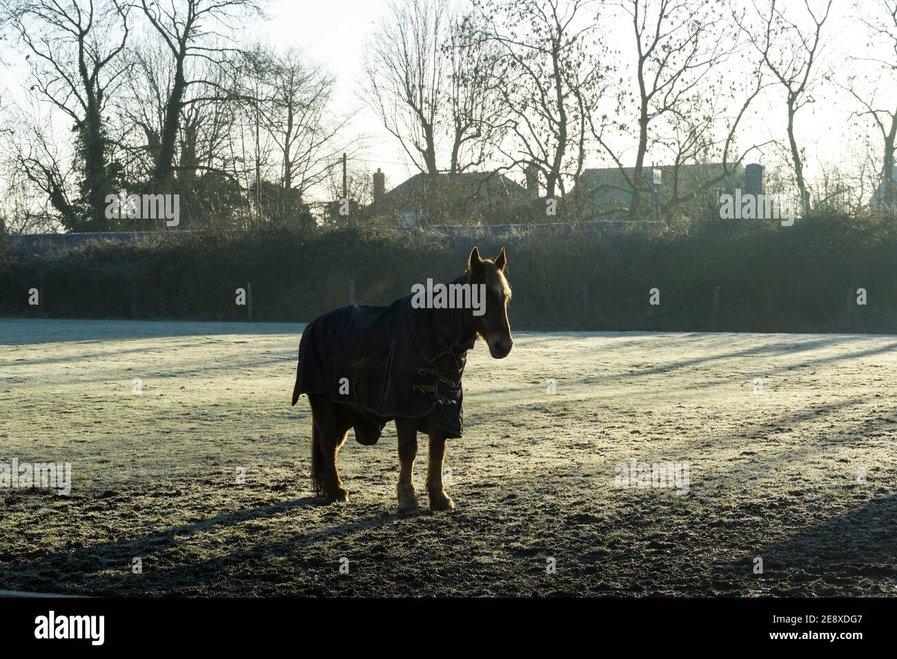 lonely-horse-in-frosty-field-on-cold-morning-light-2E8XDG7.jpg