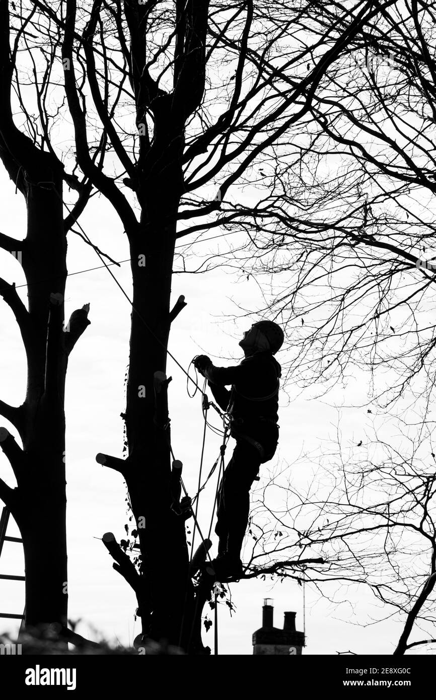 tree-surgeon-working-up-a-tree-2E8XG0C.jpg