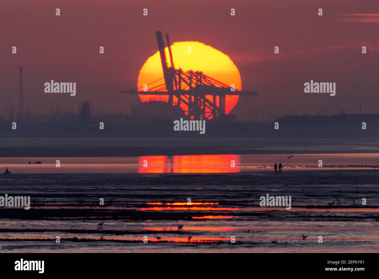 sun-setting-behind-dp-world-london-gateway-port-cranes-at-stanford-le-hope-on-the-thames-estuary-while-two-people-walk-back-to-shore-at-low-tide-2EPKY91.jpg