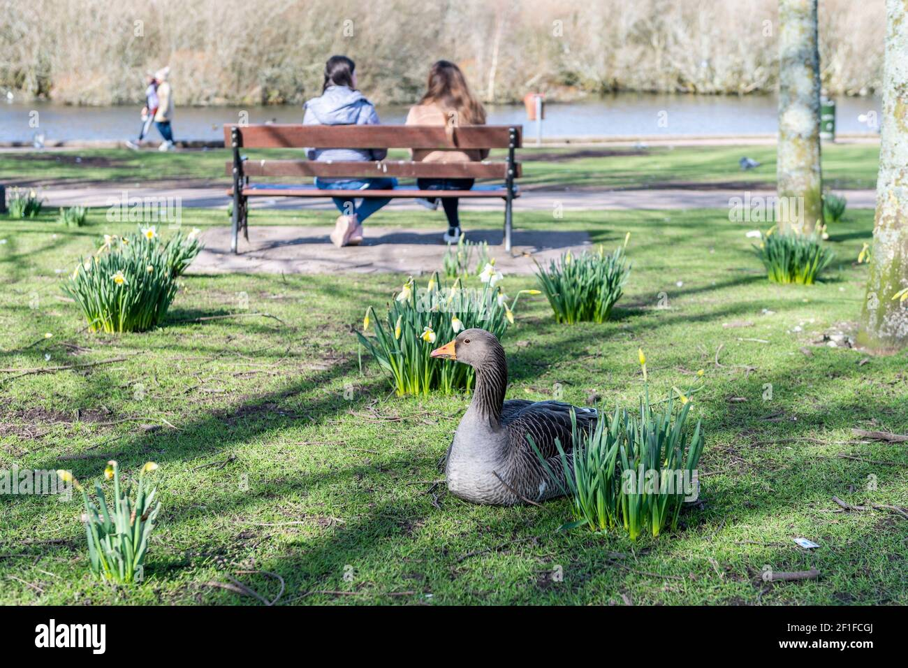 cork-ireland-8th-mar-2021-people-descended-on-the-lough-in-cork-today-on-what-was-a-cold-but-sunny-day-most-people-observed-social-distancing-credit-ag-newsalamy-live-news-2F1FCGJ.jpg