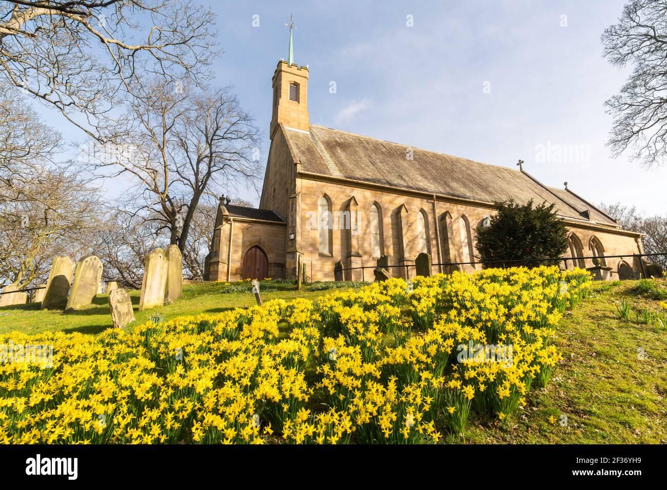 a-swathe-of-daffodils-in-the-churchyard-of-holy-trinity-church-washington-village-north-east-england-uk-2F36YH9.jpg