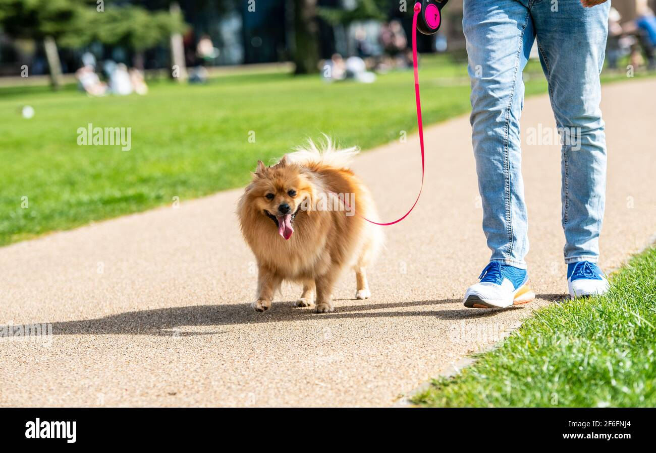 leamington-spa-uk-31st-march-2021-people-of-all-ages-bask-in-the-radiant-sun-on-a-second-day-of-a-march-heatwave-amongst-the-fields-at-victoria-park-near-the-pump-rooms-credit-ryan-underwood-alamy-live-news-2F6FNJ4.jpg