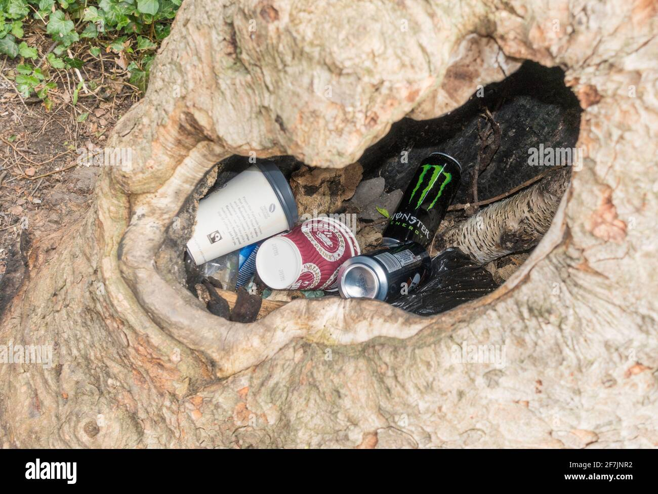 litter-deposited-within-a-hollow-tree-trunk-england-uk-2F7JNR2.jpg