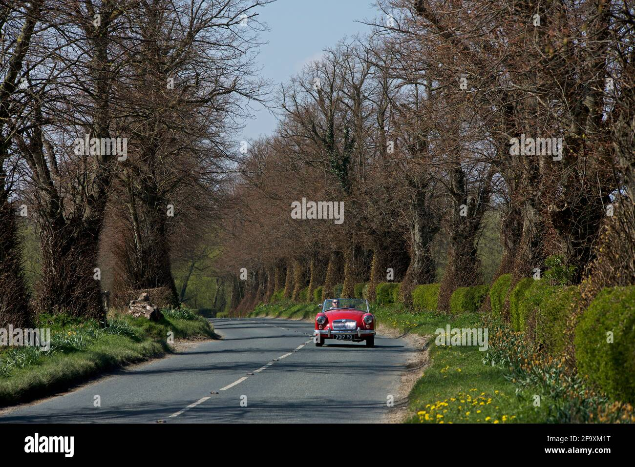 open-topped-sports-car-on-road-lined-with-trees-and-hedges-near-ulleskelf-north-yorkshire-england-uk-2F9XM1T.jpg