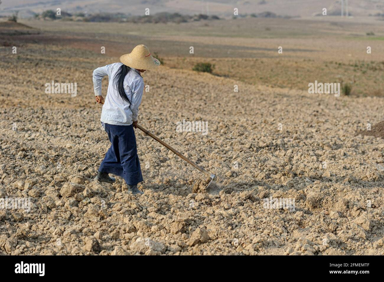 woman-harvesting-in-a-taro-root-colocasia-esculenta-field-shan-state-myanmar-2FMEMTF.jpg