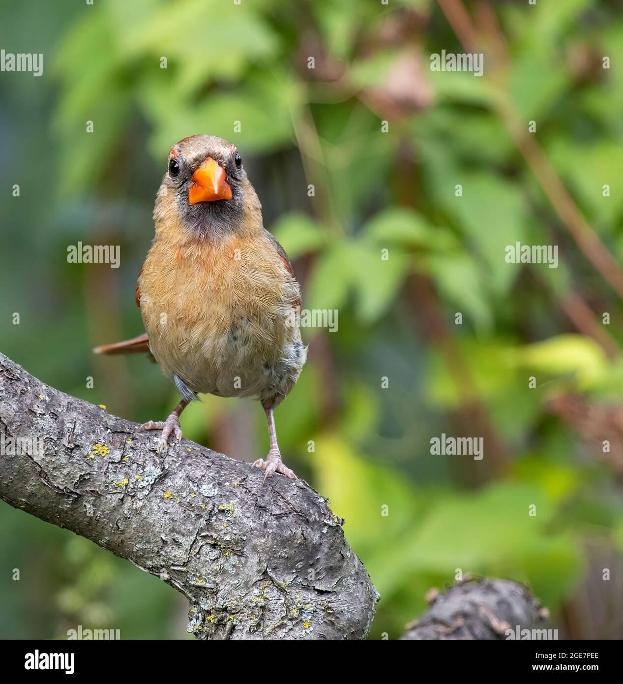 cardinal-2GE7PEE.jpg