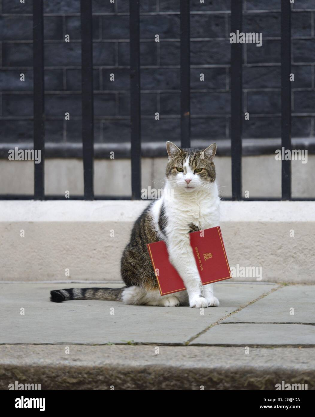Larry the Cat - Chief Mouser to the Cabinet Office since 2011 - carrying official government papers in Downing Street. [MAY BE DIGITALLY EDITED] Stock Photo