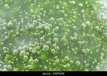 Bubbles in green substance, full frame - Stock Image