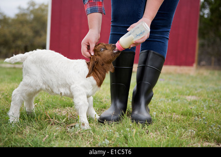 A girl bottle feeding a baby goat. - Stock Image