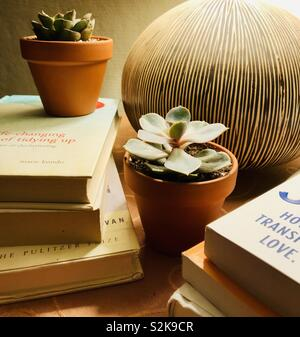 Stacked books and succulent plants decor with lamp - Stock Image