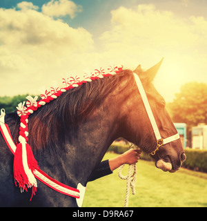 horse show - Stock Image