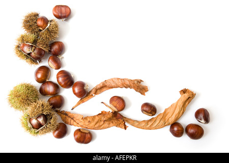 Autumn template of chestnuts isolated on white with copy space - Stock Image
