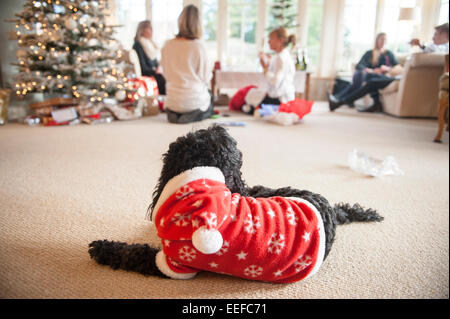 A black dog in a Christmas outfit observes the Christmas present opening and decorations by the tree. - Stock Image