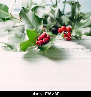European Holly (Ilex aquifolium) leaves and fruit - Stock Image