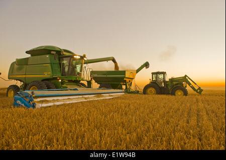 Combine unloads barley in to a grain wagon on the go near Ponteix, Saskatchewan, Canada - Stock Image