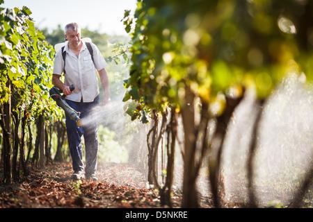 Vintner walking in his vineyard spraying chemicals on his vines - Stock Image