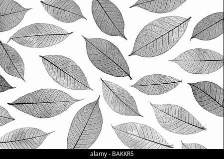 Skeleton leaves pattern. Black and White - Stock Image
