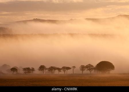 Mist covered moorland at sunrise, near Powdermills, Dartmoor, Devon, England. Autumn (October) 2011. - Stock Image