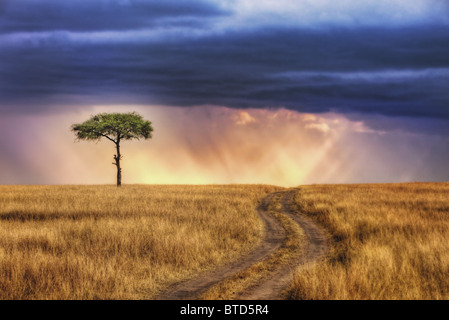 Tracks leading to lone tree on the plains of the Masai Mara National Reserve. Sun rays breaking through storm clouds. - Stock Image