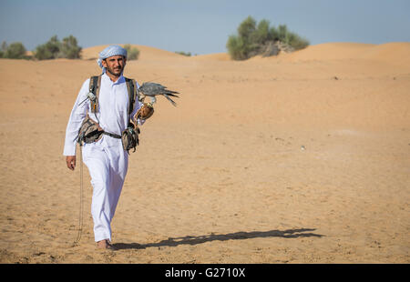 Arab man walking in a desert near Dubai with peregrine falcon on his hand - Stock Image