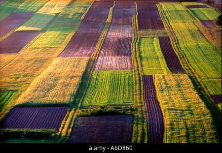 organic farm south east Poland - Stock Image
