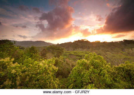 Sunrise in Soberania national park, Republic of Panama. - Stock Image