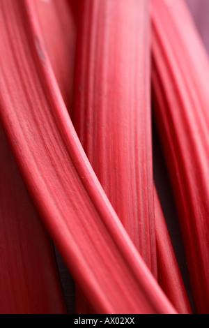 Closeup rhubarb texture - Stock Image