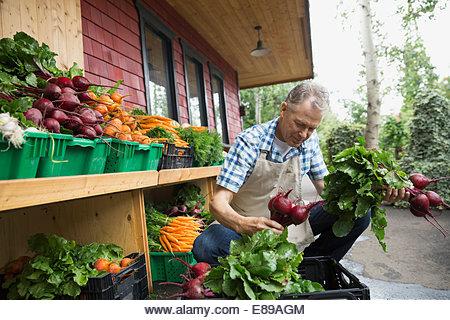 Worker unloading produce outside market - Stock Image